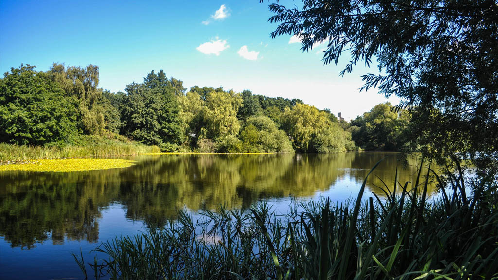 The UEA Broad bursts with colour in the Summer time.